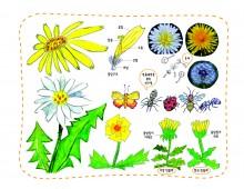 생태과학3 민들레 꽃이 피면 숲속의 친구들이 바빠져요