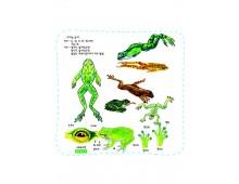 자연과학3 개구리는 왜 꼬리가 없을까