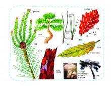생태과학16 소나무 잎은 겨울에도 왜 초록색 옷을 입고 있을까
